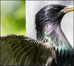 bird removal San Marcos